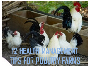 12 HEALTH MANAGEMENT TIPS FOR POULTRY FARMS - AGRO-SLIDES